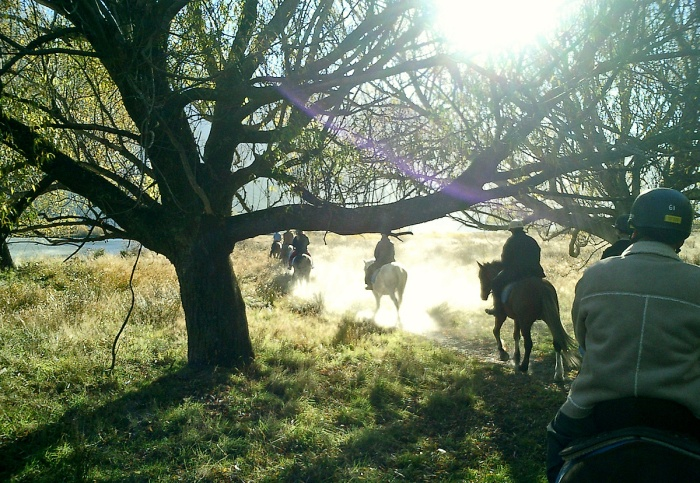 horse riding through dust and sunlight - Glenorchy New Zealand