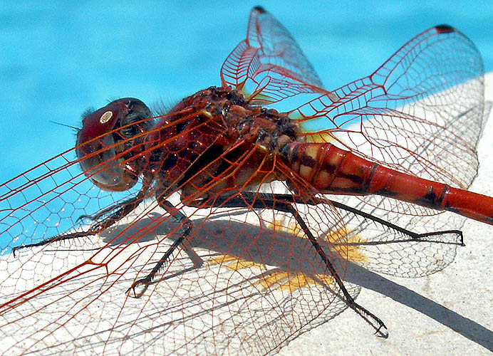 Travel photo Cyprus remote villa on edge of mountains dragonfly