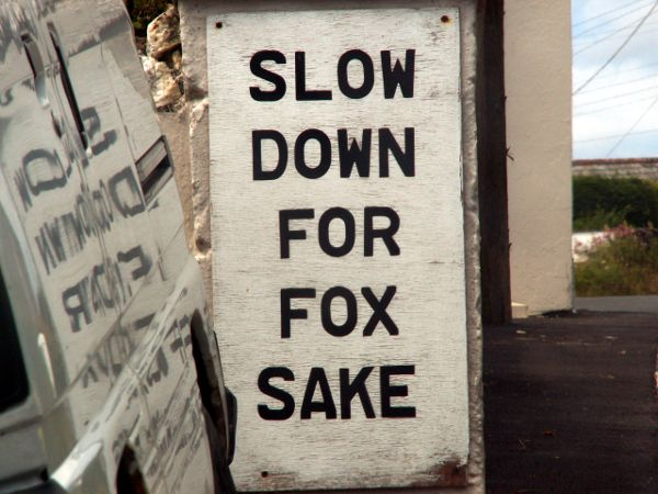 Cornwall England - travel photo - Road Sign Slow Down for Fox Sake