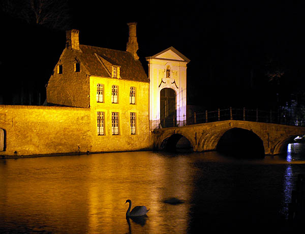 travel-photo-bruges-swan-on-river-at-night