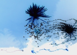 alien spores in a blue sky - photo by David J Rodger