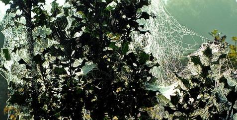 arnos-vale-cemetery-freaky-spider-web