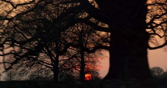 cotswolds-uk-giant-tree-in-sunset-silhouette