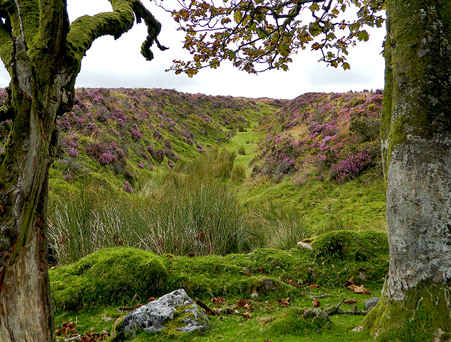Dartmoor magical gully