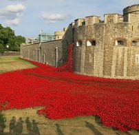 Tower of London Ceramic poppies art installation by Paul Cummins representing 800,000 commonwealth soldiers killed - David J Rodger