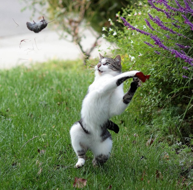 remarkable photo of cat and mouse - the cat scores a home run