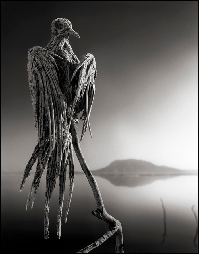 photograph of Calcified Caped Dove Lake Natron Africa  Copyright Nick Brandt 2010