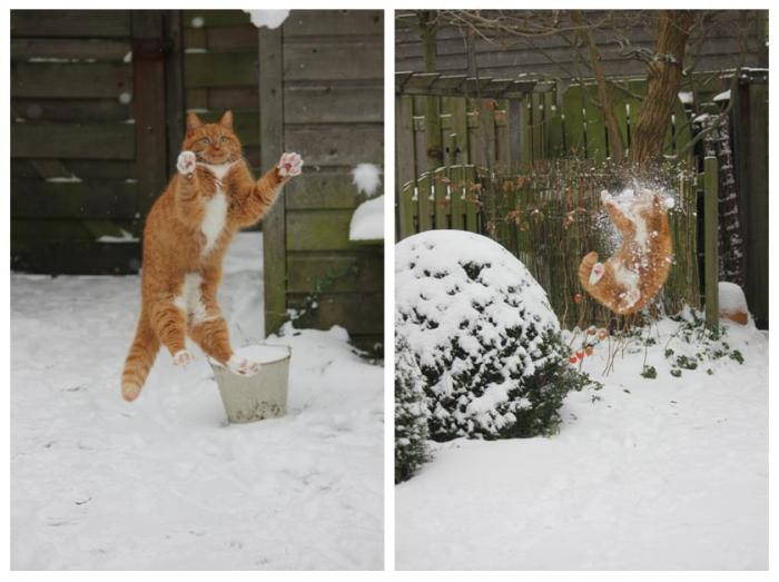 Ginger tom cat tries to catch snowball #FAIL