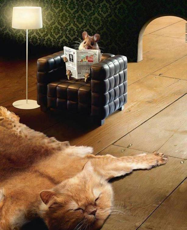 Photo- mouse reading paper in armchair with cat rug on wooden floor - The Real Tom and Jerry