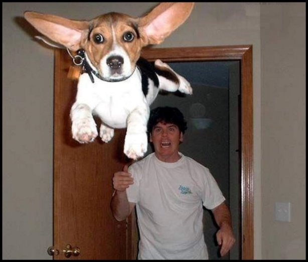photo humour man throws dog