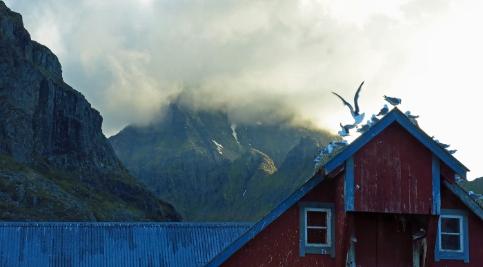 travel photo arctic circle  Norway - seagulls and misty mountains during midnight sun in Å - image copyright David J Rodger