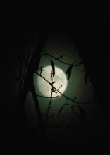 What lives by the light of a full moon