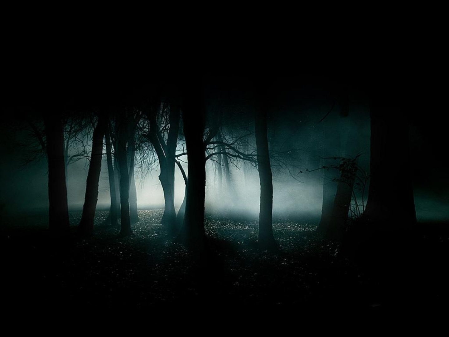 Spooky Forest by Night photo by Cynthia Myers - All Rights Reserved - used to give visual reference to free sci-fi dark fantasy story Fast Love Die by David J Rodger