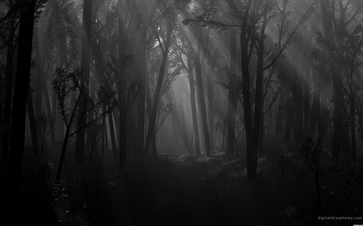 Spooky forest image for The Grove - from Digital Blasphemy Dot Com