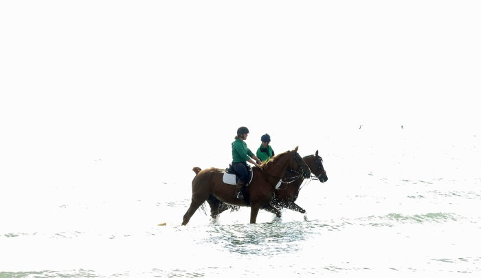 Travel Photo England Hayling Island Coastal Retreat by David J Rodger - horses galloping in sea