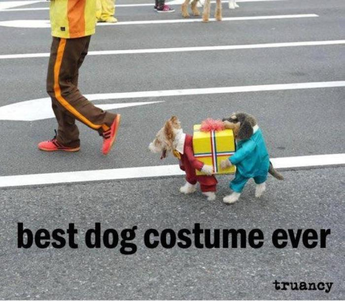 photo humour best dog costume ever - dogs carrying present between them