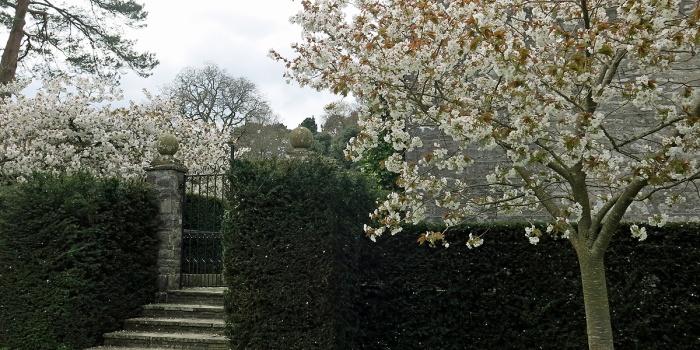 Dartington Hall - blossom tree 1920s stone gate post and steps