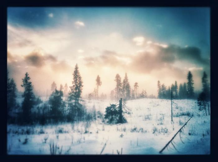 Evocative photography by Norwegian Hagenland aka do6star k9 design - arctic forest brings to mind artwork by Blair Reynolds