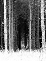 spooky wallpaper photo of forest on Dartmoor England like a scene from horror movie - free to use but please credit David J Rodger
