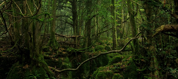 Dagobah system photograph by British science fiction thriller author David J Rodger