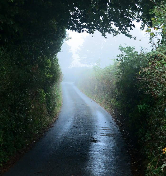 Forest of Dean - mist shrouded lane in remote English countryside - inspiration for Gothic horror and M.R.James - photo by David J Rodger