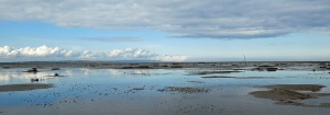 wetlands around Holy Island Lindisfarne North of England - image David J Rodger